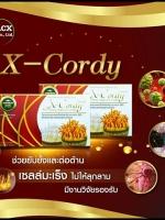 เอ็กซ์ คอร์ดี้ X-Cordy ผลิตภัณฑ์อาหารเสริมจาก ถั่งเช่าแท้ 100%