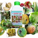 บาซิลลัส โปร ชนิดน้ำ กำจัดทำลายโรคพืช