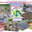 จุลินทรีย์ดิน โรงงานผลิตธาตุอาหารในดิน thumbnail 7