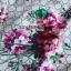 เดรสเกาหลี พร้อมส่ง ชุดเดรส พิมพ์ลายดอกไม้สีชมพู thumbnail 15
